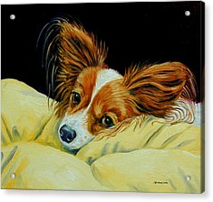 Angel Face - Papillon Acrylic Print by Lyn Cook