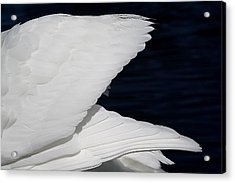Angel Wings Acrylic Print by Paulette Thomas