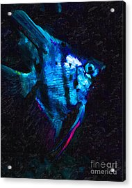 Angelfish Acrylic Print by Wingsdomain Art and Photography