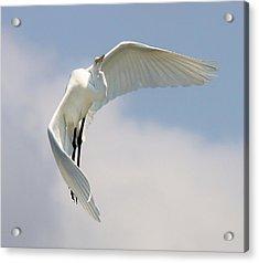 Angelic Acrylic Print by Paulette Thomas