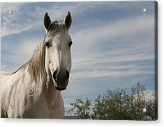 Angelina Acrylic Print by Wendi Curtis