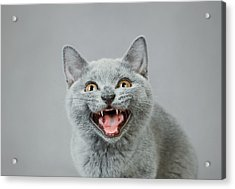 Angry Kitten Acrylic Print by Waldek Dabrowski