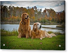 Acrylic Print featuring the photograph Angus And Lucky by Williams-Cairns Photography LLC