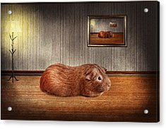Animal - The Guinea Pig Acrylic Print by Mike Savad