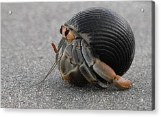Animals Hermit Crab At Curu Acrylic Print