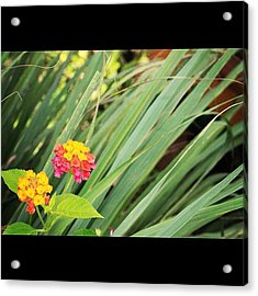 Another Wild Flower By My Lens, A Truly Acrylic Print
