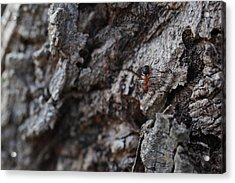 Ant Acrylic Print by Pan Orsatti