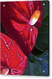 Antherium Acrylic Print by Paul Washington