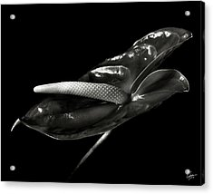 Anthurium In Black And White Acrylic Print
