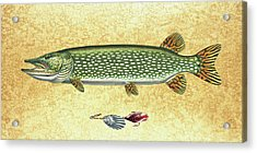 Antique Lure And Pike Acrylic Print