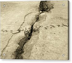 Ants And The Concrete Canyon Acrylic Print