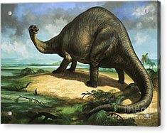 Apatosaurus Acrylic Print by William Francis Phillipps