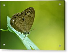 Acrylic Print featuring the photograph Appalachian Brown by JD Grimes