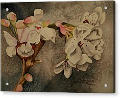 Acrylic Print featuring the painting Apple Blossom by Teresa Beyer