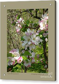 Apple Blossoms-ix Acrylic Print