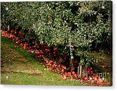 Apple Fall Acrylic Print