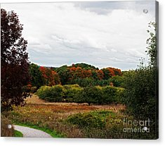 Apple Orchard Gone Wild Acrylic Print by Barbara McMahon
