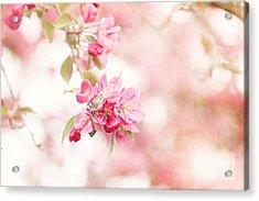 Apple Tree In Spring Acrylic Print
