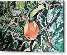 Apple Tree Sketchbook Project Down My Street Acrylic Print by Irina Sztukowski
