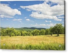 Apple Trees And Hay Field In Summer Maine Acrylic Print