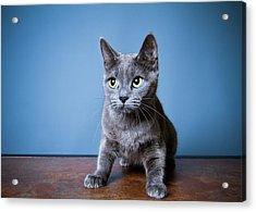 Apprehension Acrylic Print by Square Dog Photography
