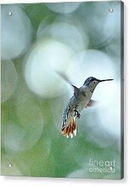 Approaching The Light Acrylic Print by Wayne Nielsen