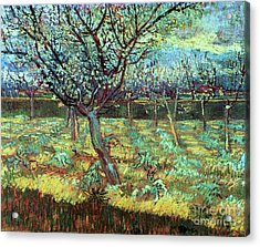 Apricot Trees In Blossom Acrylic Print by Pg Reproductions