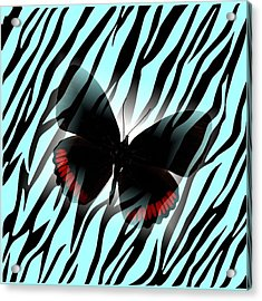 Aqua Zebra With Black Butterfly Acrylic Print by Florene Welebny