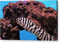Aquarium Art 14 Acrylic Print by Steve Ohlsen