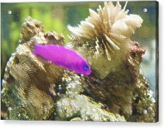 Aquarium Art 23 Acrylic Print by Steve Ohlsen