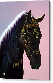 Arab Horse Acrylic Print by MGL Studio - Chris Hiett