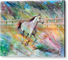 Acrylic Print featuring the painting Arabian Dream Horse by Nancy Tilles