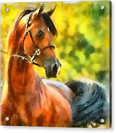 Acrylic Print featuring the painting Arabian Stallion by Elizabeth Coats