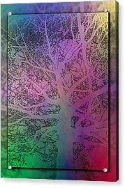 Arboreal Mist 1 Acrylic Print by Tim Allen