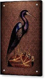 Ardea Caerulea Acrylic Print by Li   van Saathoff