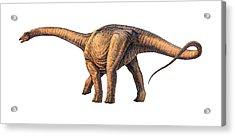 Argentinosaurus Dinosaur Acrylic Print by Joe Tucciarone