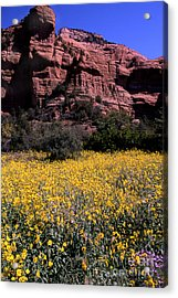 Arizona Flower Field Acrylic Print by Barry Shaffer