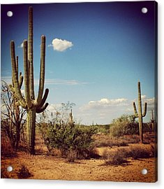 Arizona Acrylic Print by Luisa Azzolini