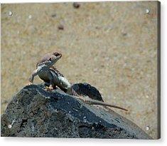 Arizona Wildlife Acrylic Print by Wayne Toutaint