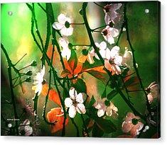 Armonia En La Naturaleza Acrylic Print