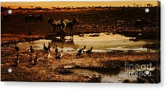 Acrylic Print featuring the photograph Around The Pond by Lydia Holly