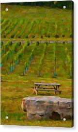 Arrington Vineyards Acrylic Print by Paul Bartoszek