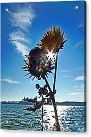 Acrylic Print featuring the photograph Artichoke Bones by William Fields