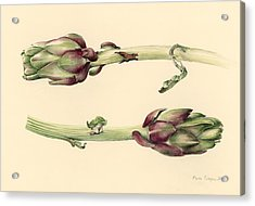 Artichokes Acrylic Print by Alison Cooper