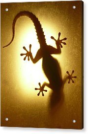 Artistic Backlight Shot Of A Gecko, Nicely Shaped. Acrylic Print by Sir Francis Canker Photography