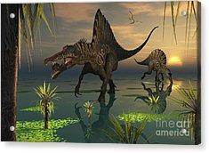 Artists Concept Of Spinosaurus Acrylic Print by Mark Stevenson