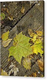 Artsy Autumn Leaves On Wood Acrylic Print by M K  Miller