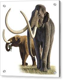 Artwork Of A Mammoth And A Mastodon Acrylic Print by Raul Martin