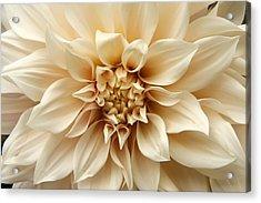 Arundel Blossom Acrylic Print