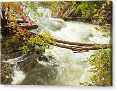 As The River Flows Acrylic Print by Karol Livote